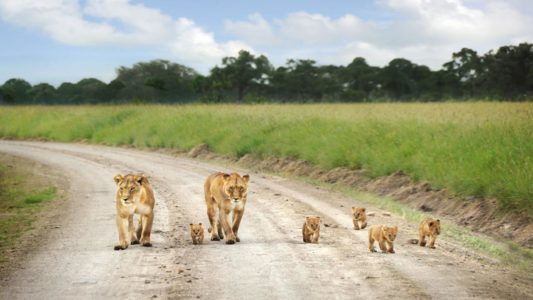 5-Day Masai Mara & Lake Nakuru Safari