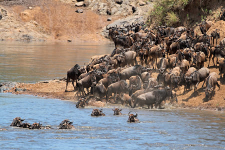 8 Day Safari to Mt Kenya, Samburu, Ol Pejeta, Nakuru & Masai Mara