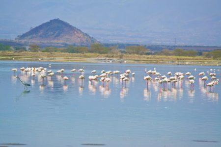 Flamingos Sirville Lodge Elementaita