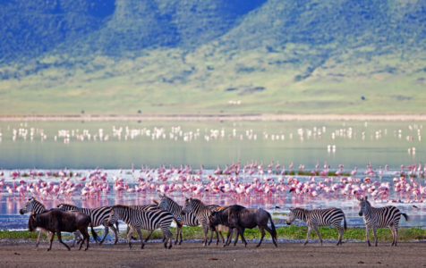 6 Day Tanzania Northern Circuit Road Safari