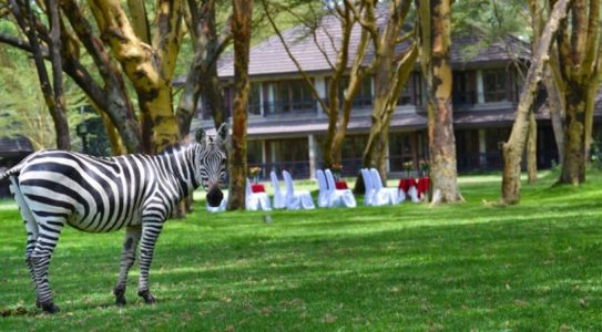 Simba Lodge Grounds Naivasha