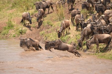 3 Day Masai Mara Safari (Road Package)