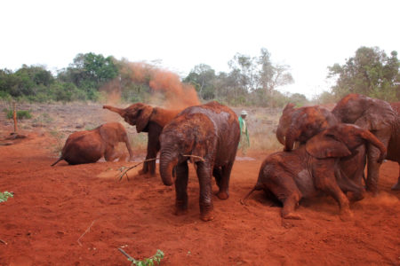 David Sheldrick Nairobi Excursion
