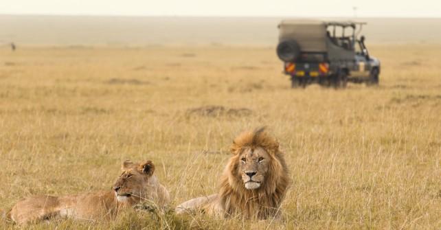Masai Mara Self Drive
