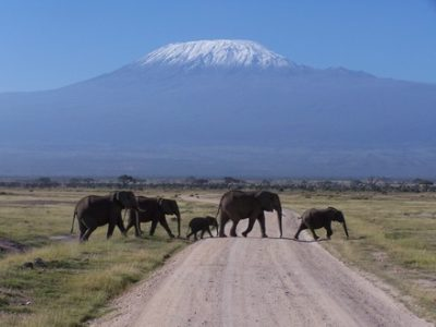 Amboseli Park Elephants
