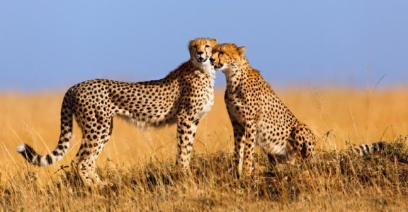 2 Night Maasai Mara Road Safari (Resident)