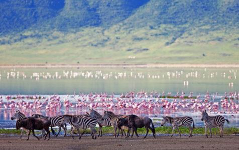 6 Day Tanzania Northern Circuit Road Safari