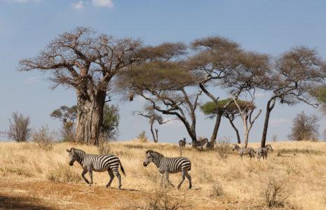 Tarangire National Park Vacay Deals