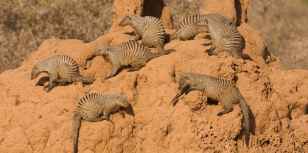Tarangire Termite Mound Vacay Deals