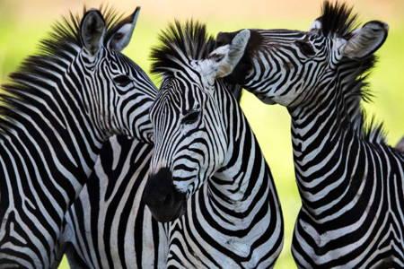 7 Day Zimbabwe & Botswana Road Safari with Sunset Cruise