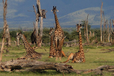 Tanzania Northern Circuit Luxury Safari