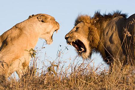 Ol Pejeta Road Safari