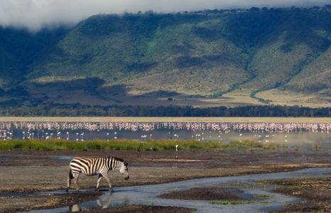 3 Day Ngorongoro Crater Safari