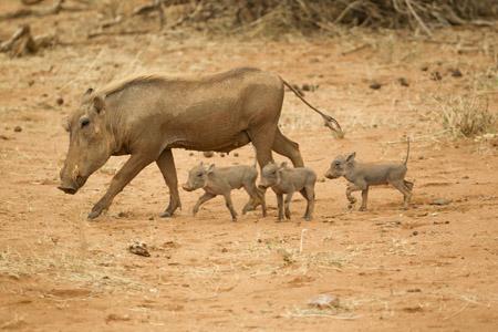 Samburu Road Safari