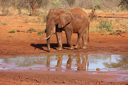 Tsavo West Safari