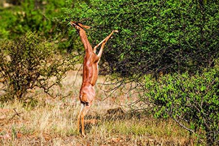Samburu Flying Package