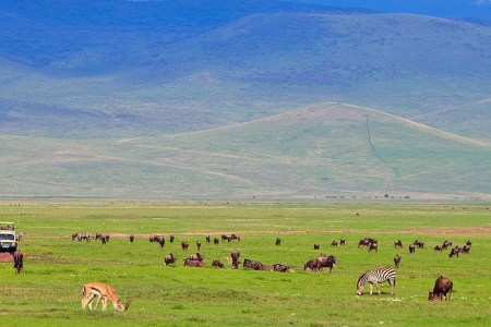 3 Day Ngorongoro Budget Safari