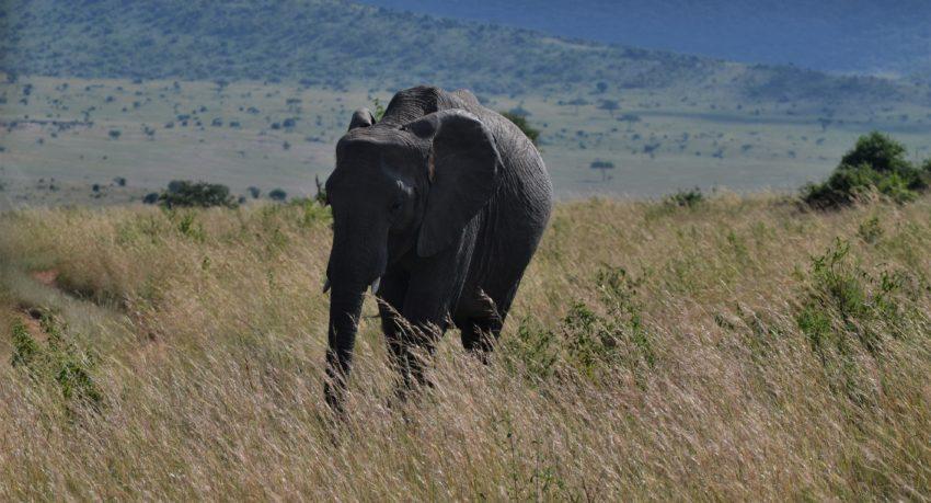 Masai Mara Safari Sharing